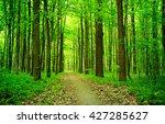 path in green summer forest | Shutterstock . vector #427285627