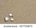 the sandy beach and dead shells ... | Shutterstock . vector #427720873