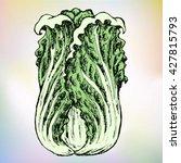 beautiful hand drawn... | Shutterstock .eps vector #427815793