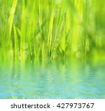 natural background with green... | Shutterstock . vector #427973767