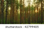 Forest. A Coniferous Forest In...