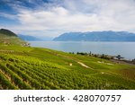evening on vineyards of the...   Shutterstock . vector #428070757
