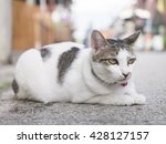 cat sitting on pavement. | Shutterstock . vector #428127157