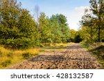 Sandy Path Through The Dutch...