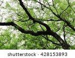 tree with sky. | Shutterstock . vector #428153893