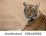 this is a portrait of the... | Shutterstock . vector #428160583