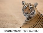 this is a portrait of the... | Shutterstock . vector #428160787