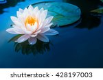 beautiful waterlily or lotus... | Shutterstock . vector #428197003