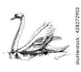 hand drawn swan. realistic... | Shutterstock .eps vector #428272903