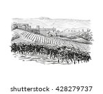 vineyard landscape vector... | Shutterstock .eps vector #428279737