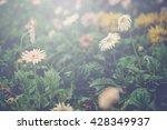 Gerbera Flower Park With Light