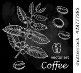 hand drawn vintage coffee plant.... | Shutterstock .eps vector #428777383