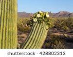 Saguaro In Bloom In Saguaro...