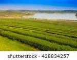 green tea plantation landscape | Shutterstock . vector #428834257