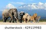 big five africa   lion ... | Shutterstock . vector #429119983