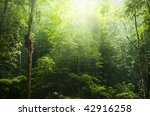 green forest with ray of light. | Shutterstock . vector #42916258