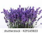 Lavender Isolated On White...