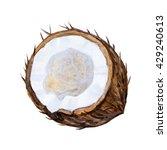 ripe watercolor coconuts.... | Shutterstock . vector #429240613