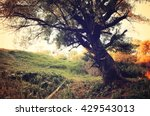 autumn cloudy forest landscape... | Shutterstock . vector #429543013