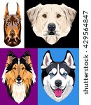 set of portraits of dogs   a... | Shutterstock .eps vector #429564847