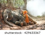 Small photo of Novice lollop on baby elephant