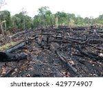 destroyed tropical rainforest... | Shutterstock . vector #429774907