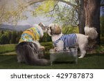 puppy shih tzu and a cat roast... | Shutterstock . vector #429787873