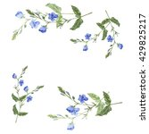forget me not set. wild blue... | Shutterstock . vector #429825217