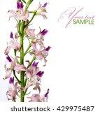 pink flower | Shutterstock . vector #429975487