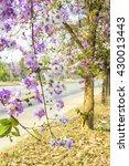 beautiful purple flower soft...   Shutterstock . vector #430013443