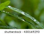 Dew Drops Close Up.