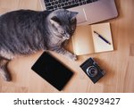 Stock photo lazy cat working concept 430293427