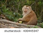 monkey sitting on  root the tree | Shutterstock . vector #430445347