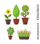 home bush plant in pot culture... | Shutterstock .eps vector #430628653