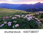 Small photo of Beautiful sunrise scenery of Hehuan Mountain in central Taiwan in springtime, with view of lovely Alpine Azalea ( Rhododendron ) blossoms on grassy fields and amazing golden clouds in the background