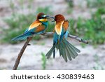 group of european bee eater or...
