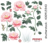 Stock vector set of elements of peony flower leaves and grass to create designs vector illustration imitates 430915543