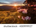 Small photo of Beautiful sunrise scenery of Hehuan Mountain in central Taiwan in springtime, with lovely Alpine Azalea (Rhododendron) blossoms on grassy fields & sunrays shining through rosy clouds in the background