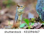 Chipmunks Are Small  Striped...