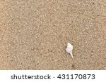 fossil shell on the sand beach | Shutterstock . vector #431170873