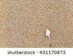 fossil shell on the sand beach | Shutterstock . vector #431170873