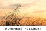 grass flower with sunset... | Shutterstock . vector #431328367
