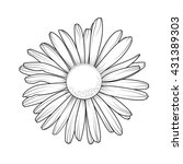 chamomile daisy close up top... | Shutterstock .eps vector #431389303