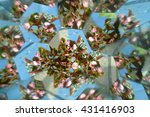 Abstract Background  Flowers...