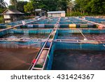 red tilapia fish farming...   Shutterstock . vector #431424367