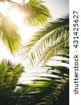 Sun Shining Through With Palm...