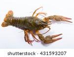 Crayfish On A White Background...