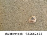 fossil shell on the sand beach | Shutterstock . vector #431662633