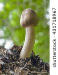 Small photo of low angle shot of a mushroom in blurry natural forest ambiance
