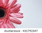 abstract soft focus of pink... | Shutterstock . vector #431792347